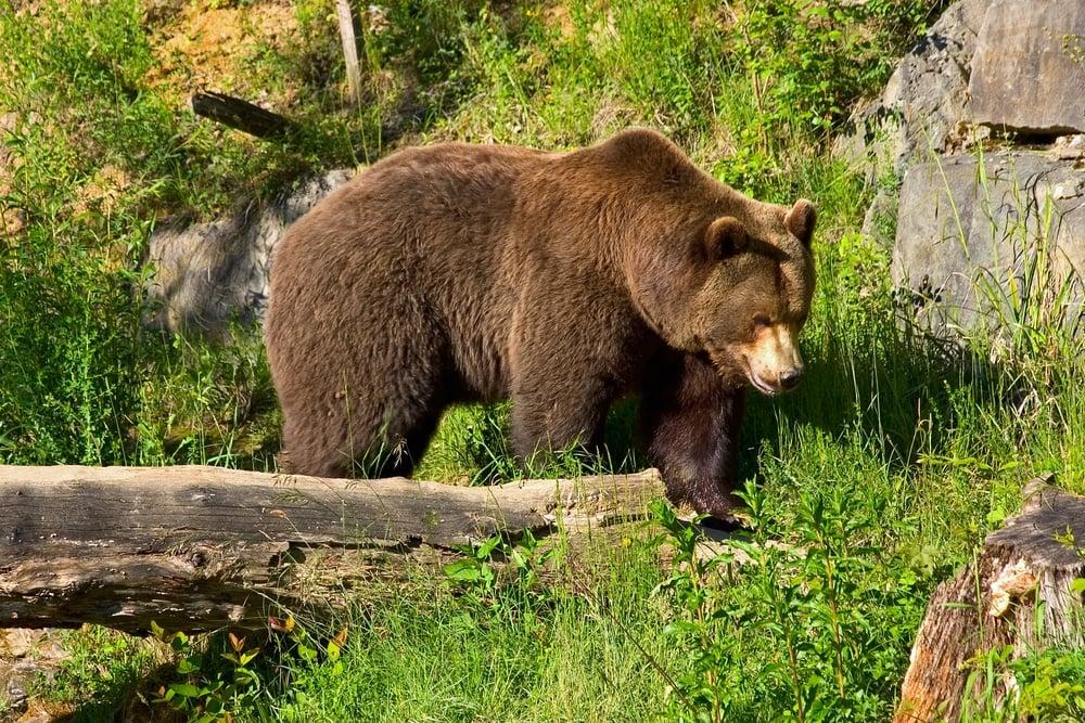 Langenberg Wildlife Park Zurich