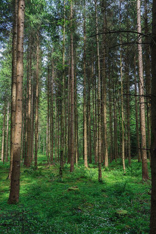 Sihlwald Forest Zurich