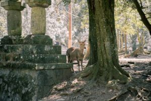 Nara Deer tour from Kyoto
