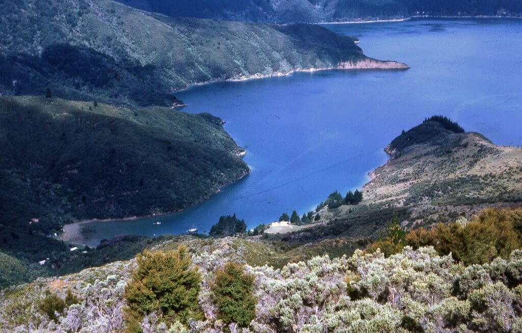 The Queen Charlotte Track is the main thing to do in Picton
