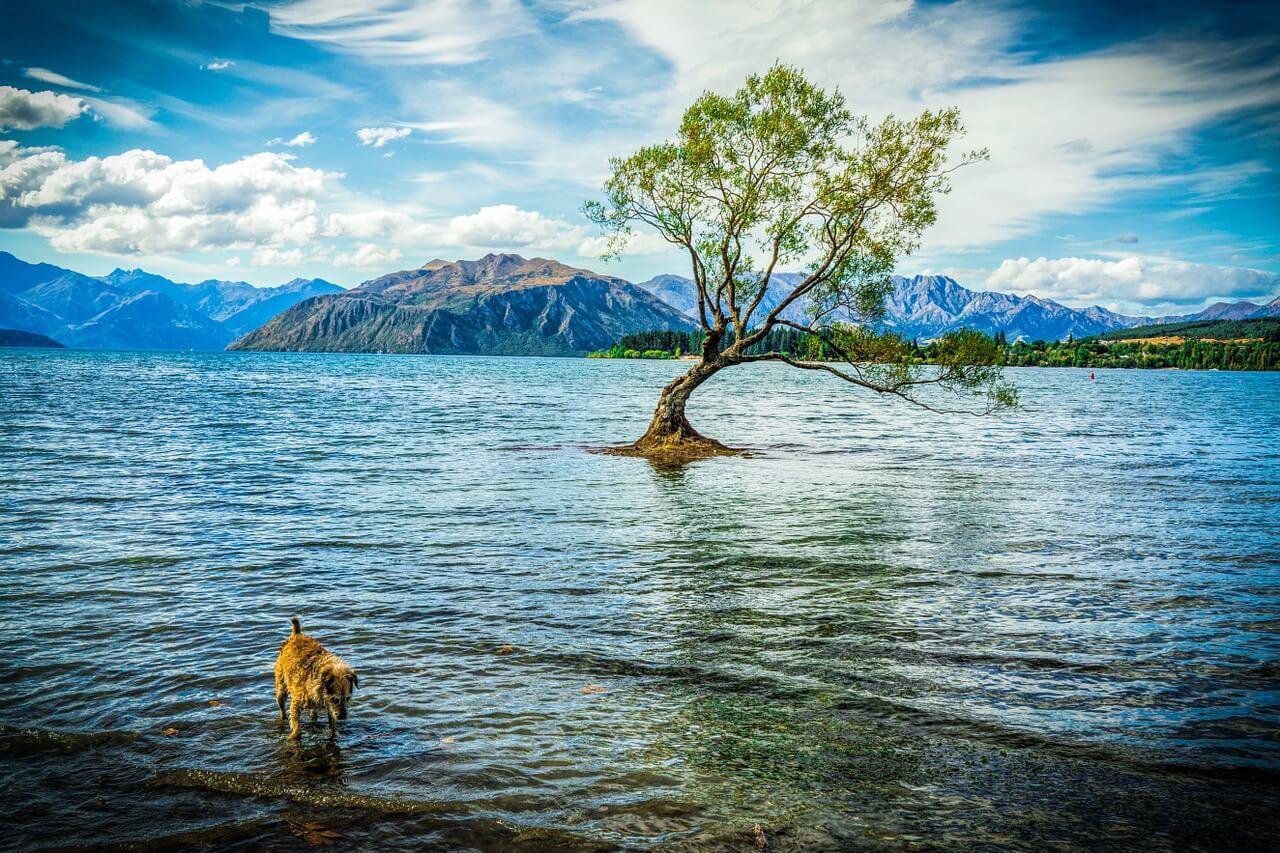 The famous Instagram spot in Wanaka, New Zealand - the Wanaka Tree