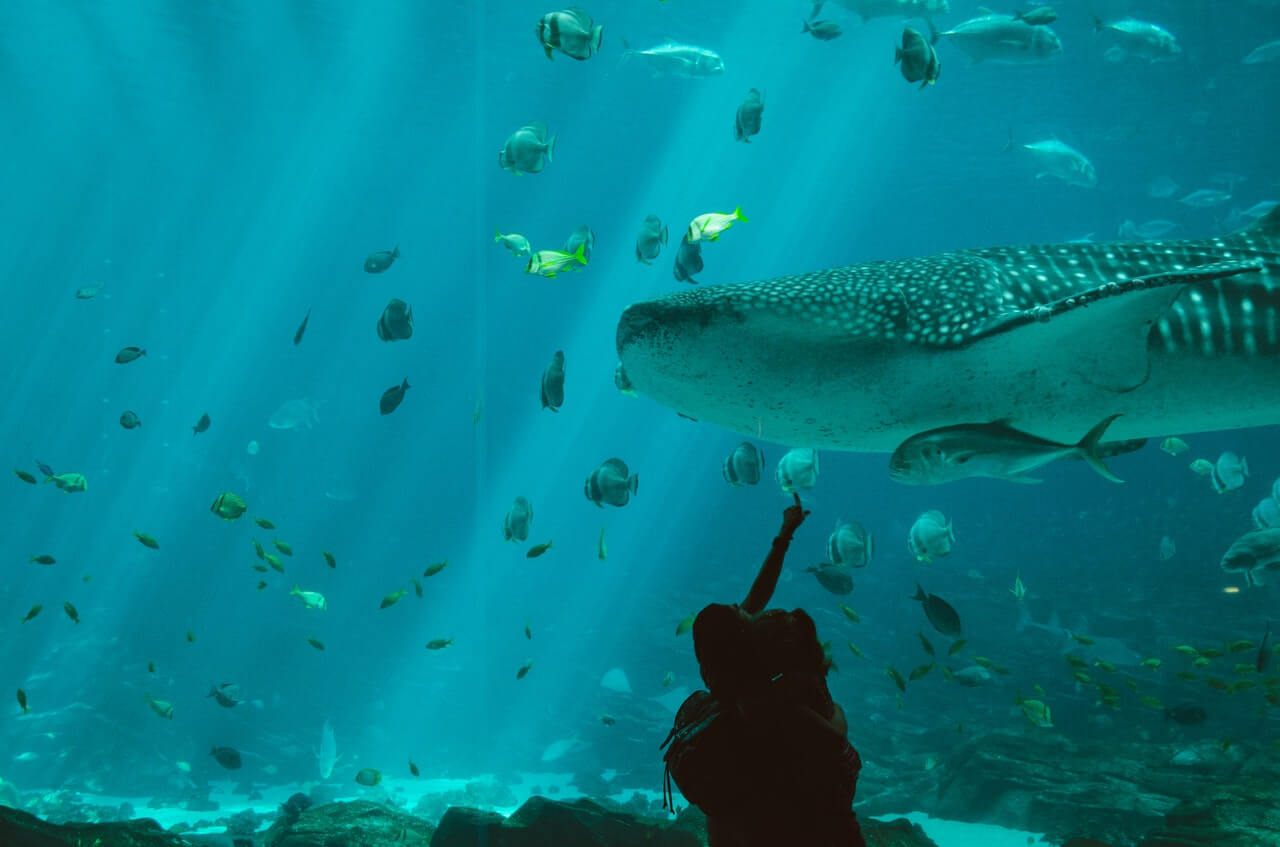 The Sunshine Coast's Sea Life Aquarium ocean tunnel