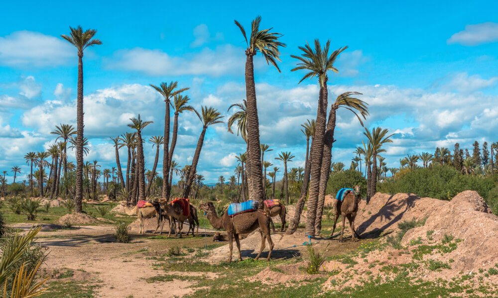 when to visit marrakech