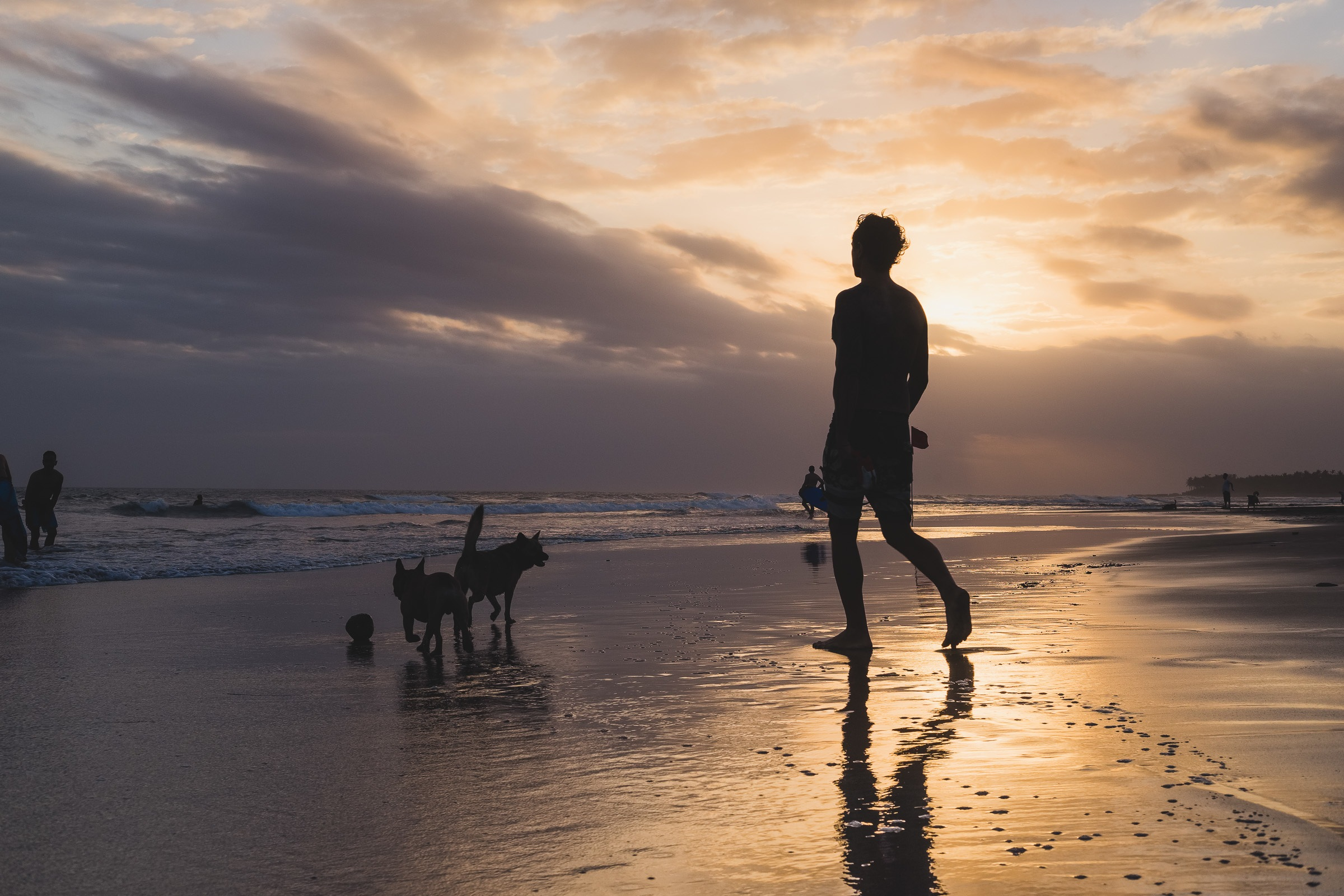 walking the dog at the end of day in canggu