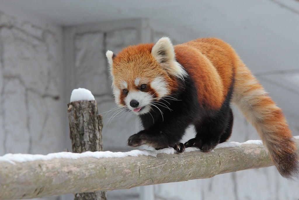 Sapporo City Maruyama Zoo