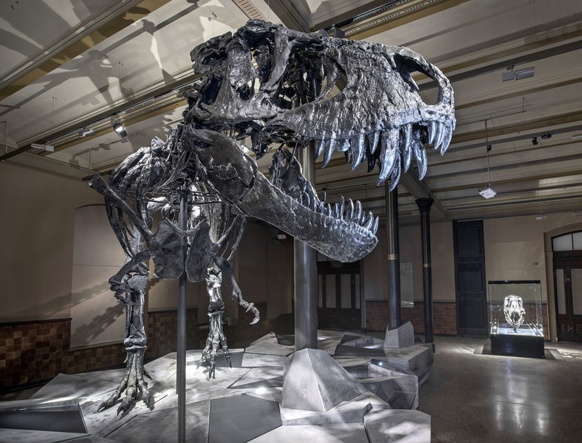 Discover Germany's largest natural history museum in Berlin.