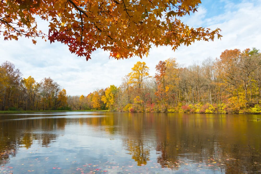 Peaceful scenery at the Eagle Creek Park in Indianapolis.