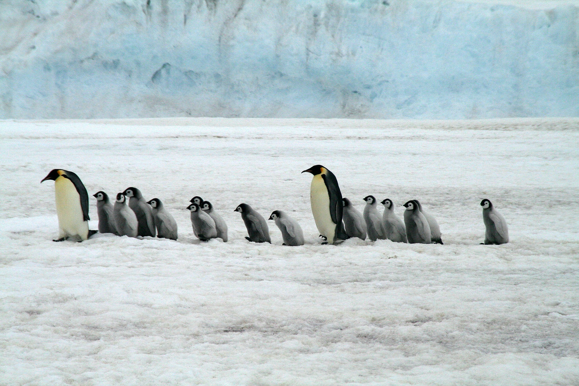 Antarctica rounds of 7 continents of best places for adventure travel