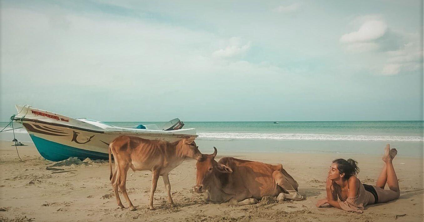 A female backpacker in Sri Lanka lies on a tourist beach with cows