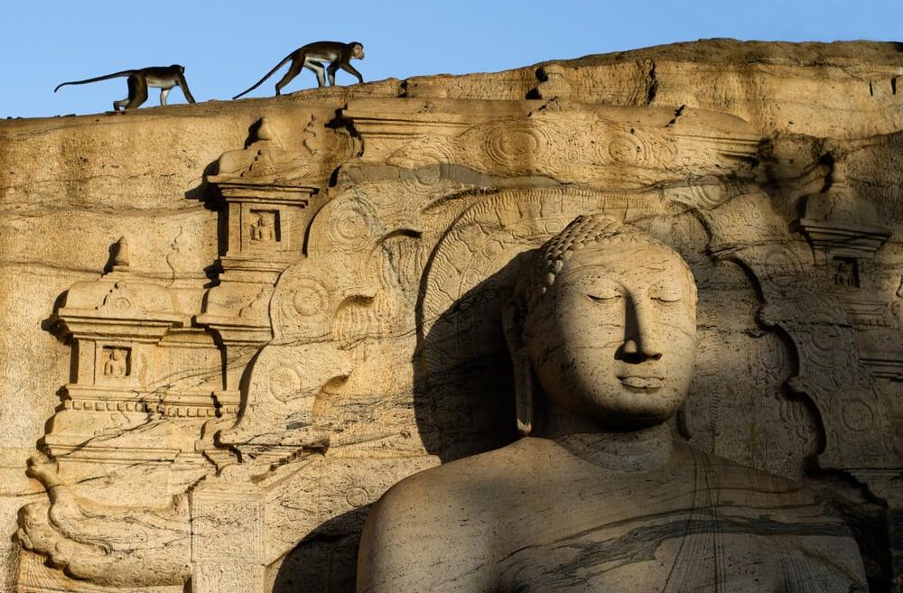 Polonnaruwa ruins and monkeys - a major historical site in Sri Lanka to visit