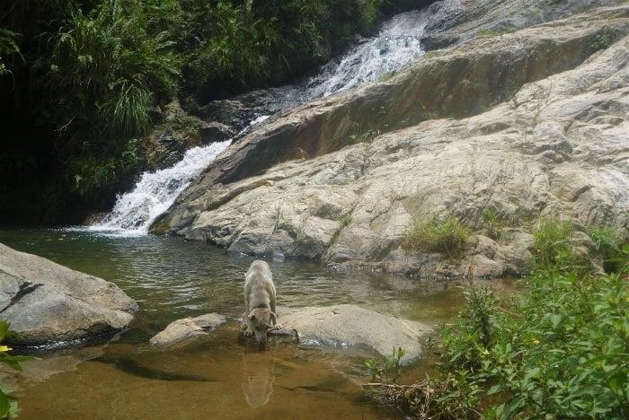 Secret Waterfall: waterfalls in Ella