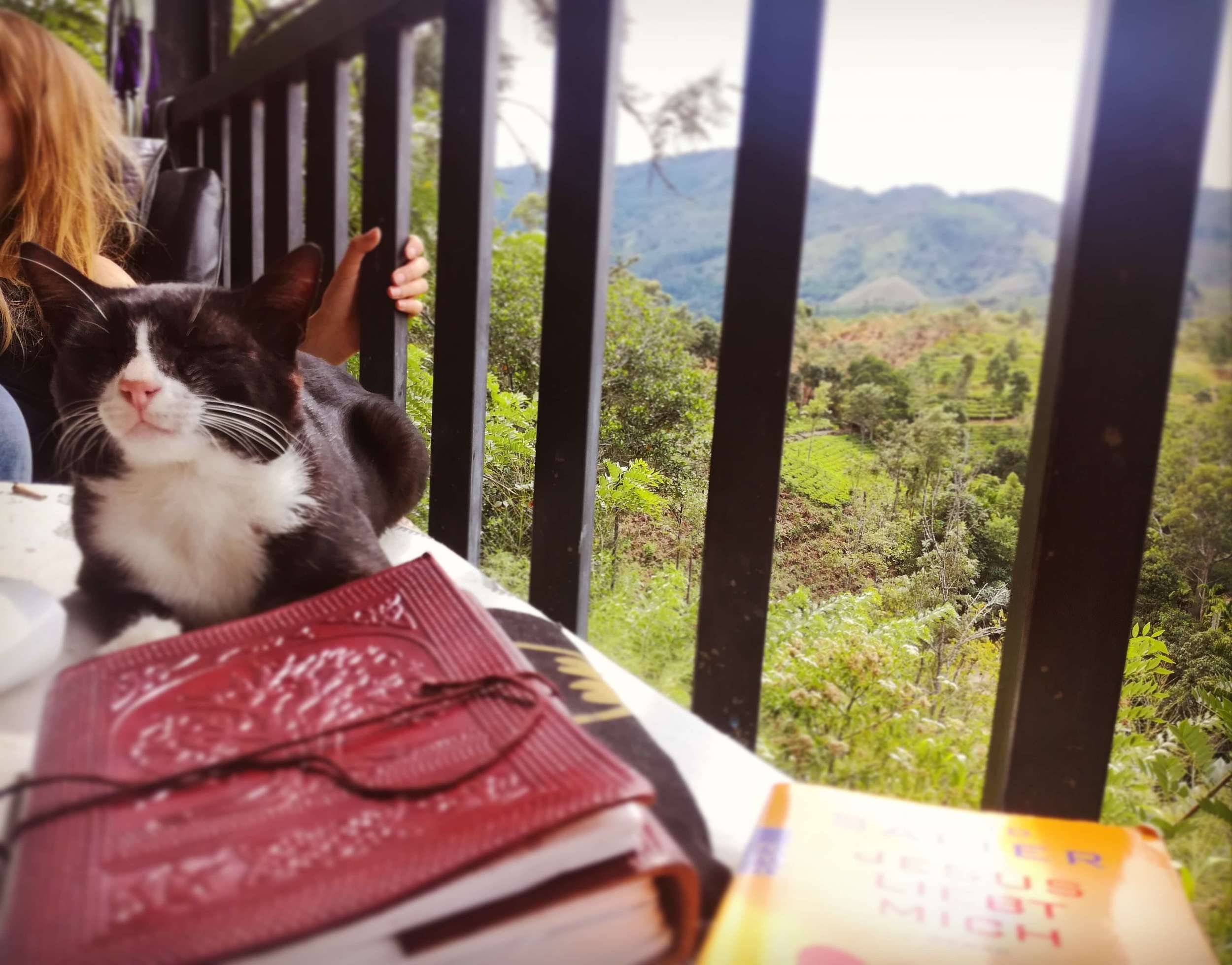 A kitty and view from a top hostel in Indonesia