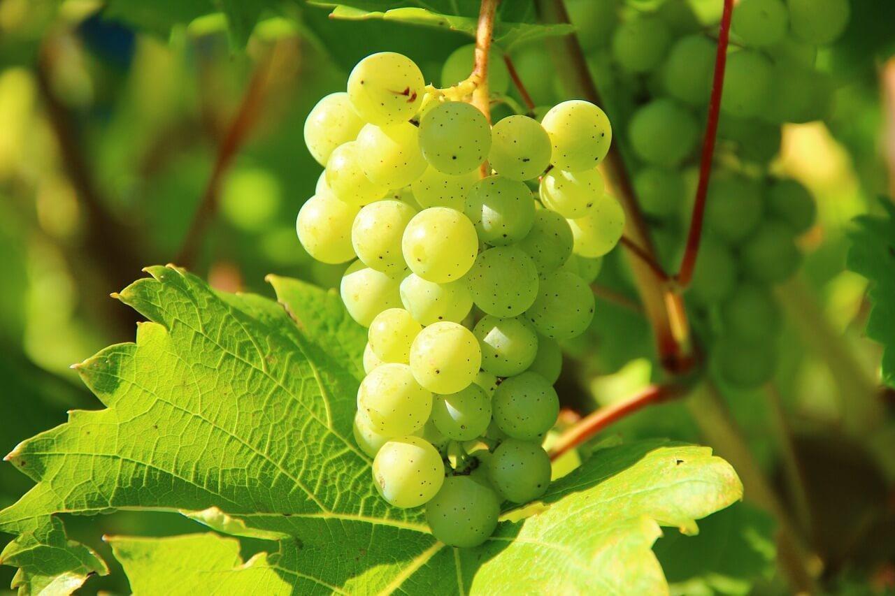 Drink Around the Somerset Wine Trail