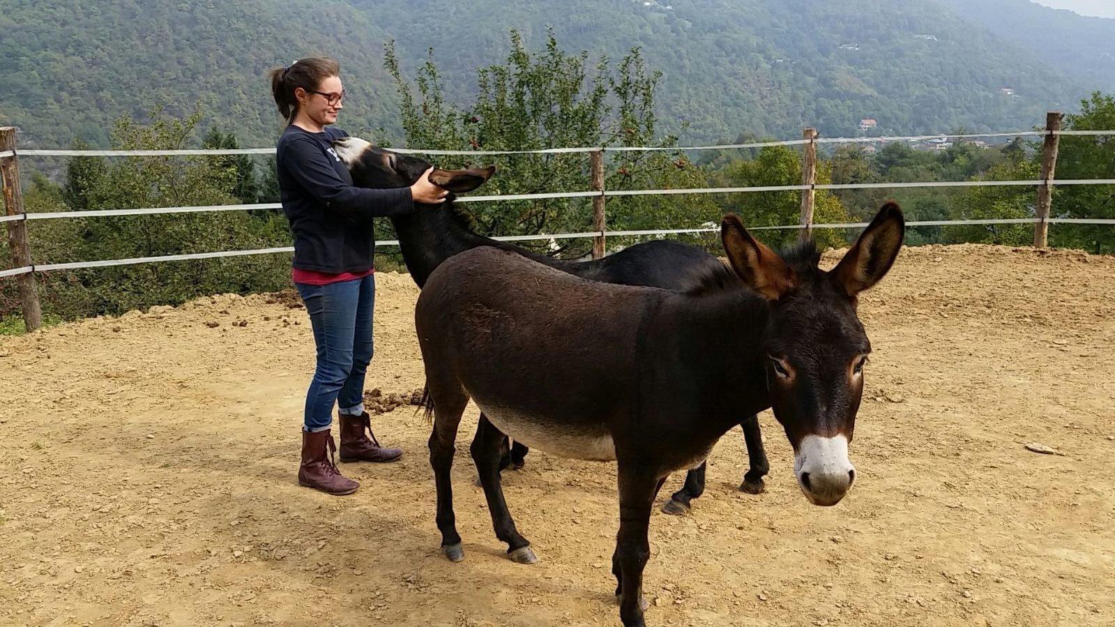 wwoofing italy donkeys