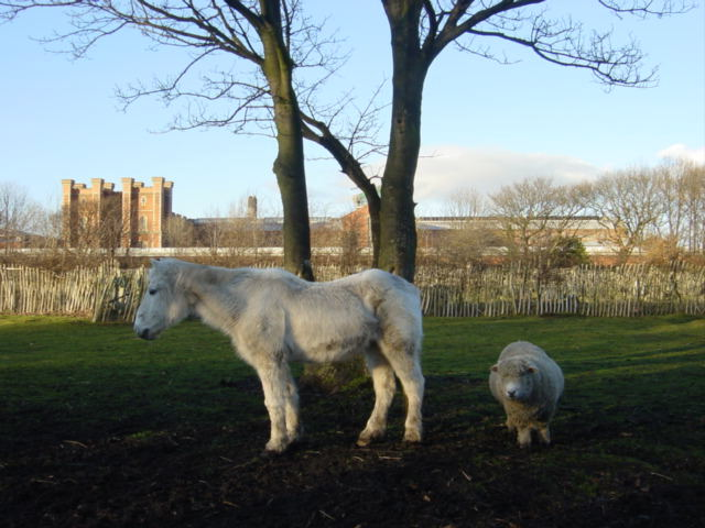 Animals at the Rice Lane City Farm in Liverpool.