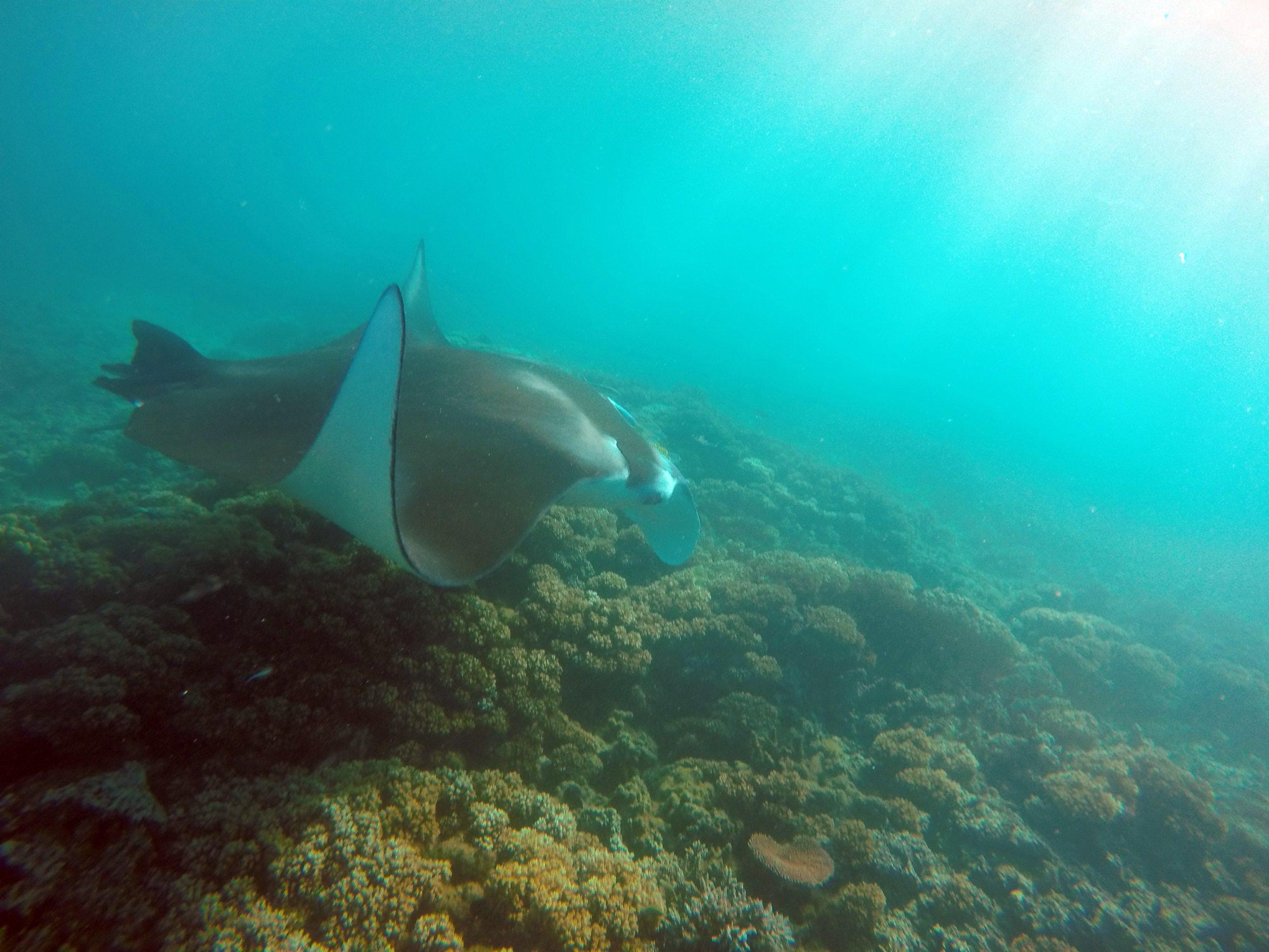 Manta Ray Island