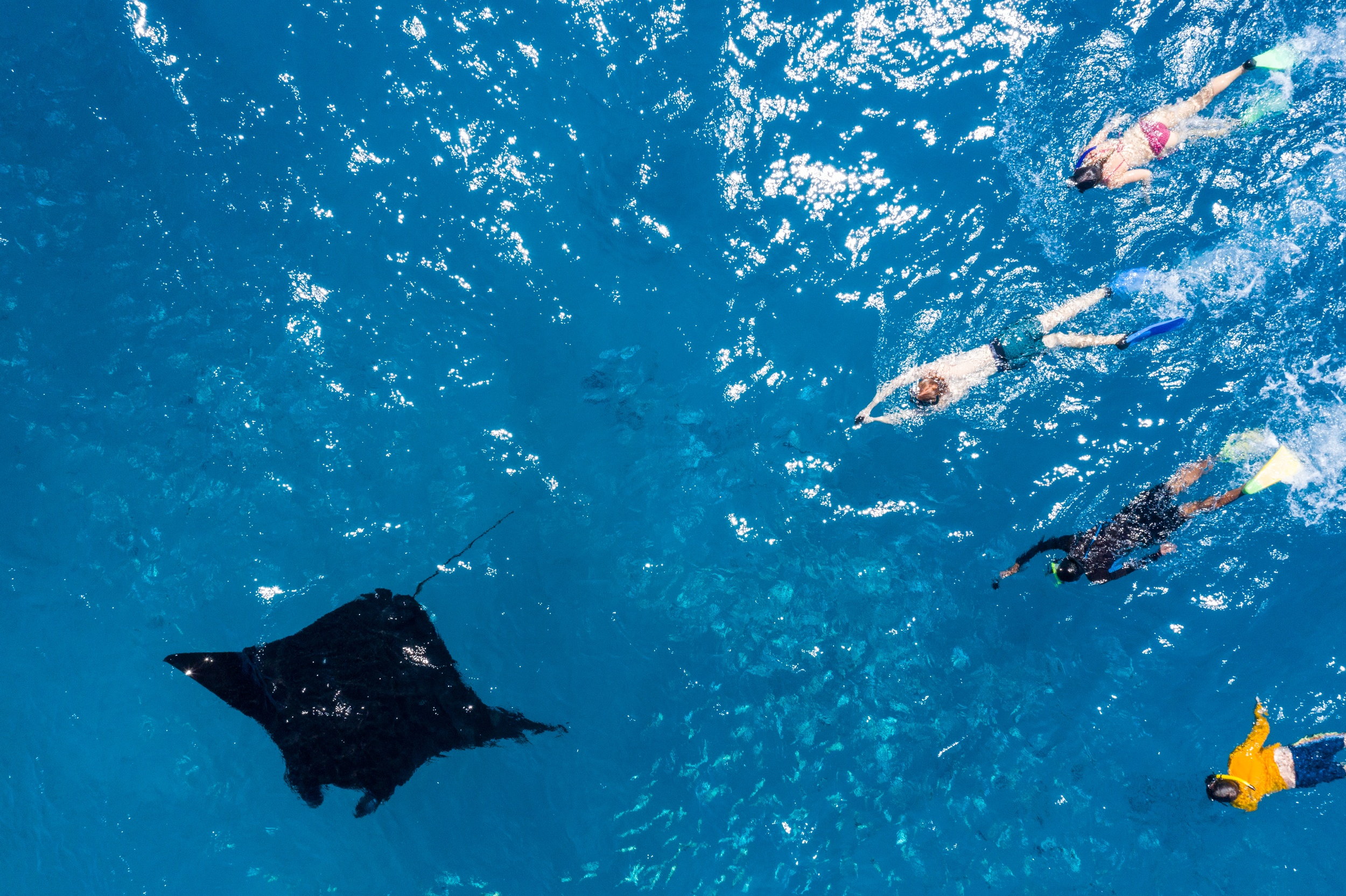 Swim with Manta Rays in Yasawas Famous Coral Reefs