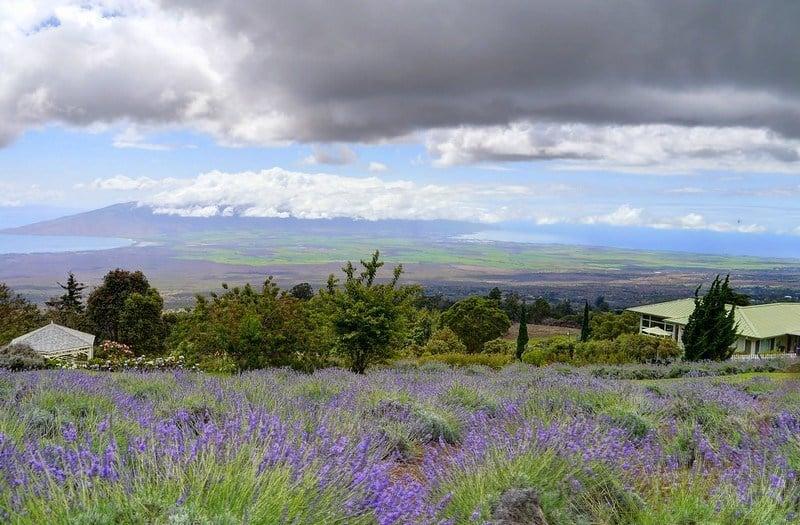 Alli Kula Lavender Farm, Maui