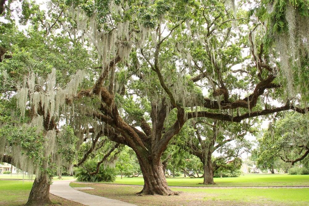Explore New Orleans' city park.