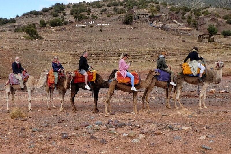 Ride an real life camel