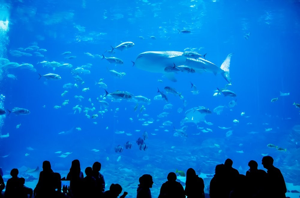Shutterstock-Day-at-Georgia-Aquarium