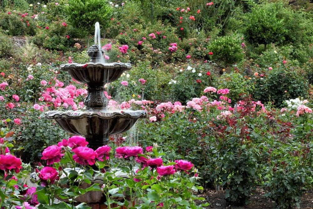 International Rose Test Garden Portland