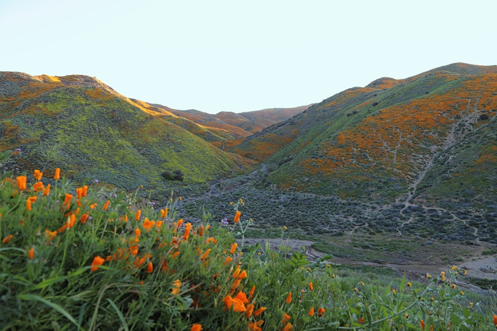 Scenery in Temecula