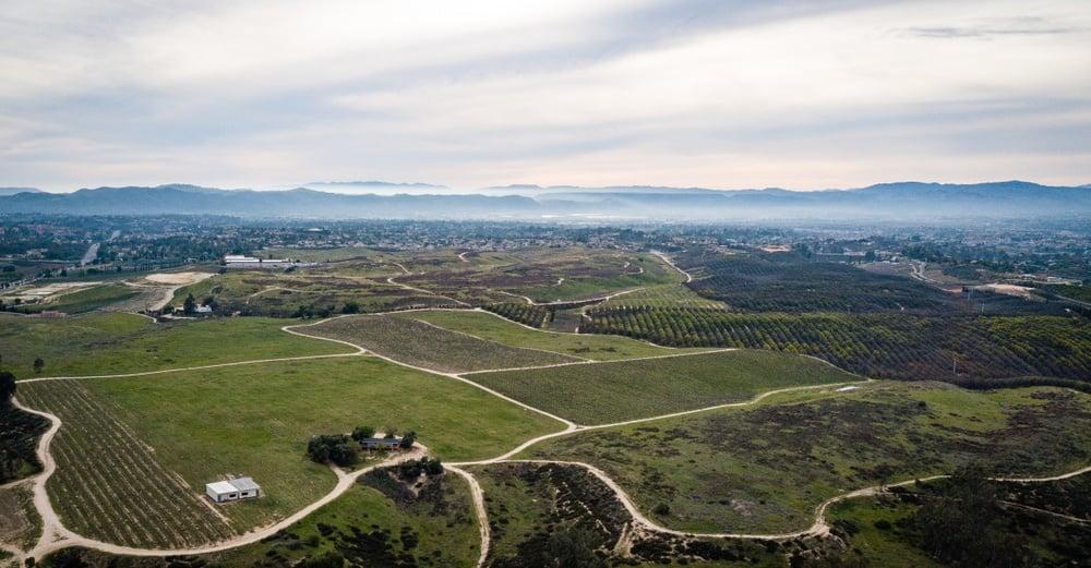 Vineyards in Temecula