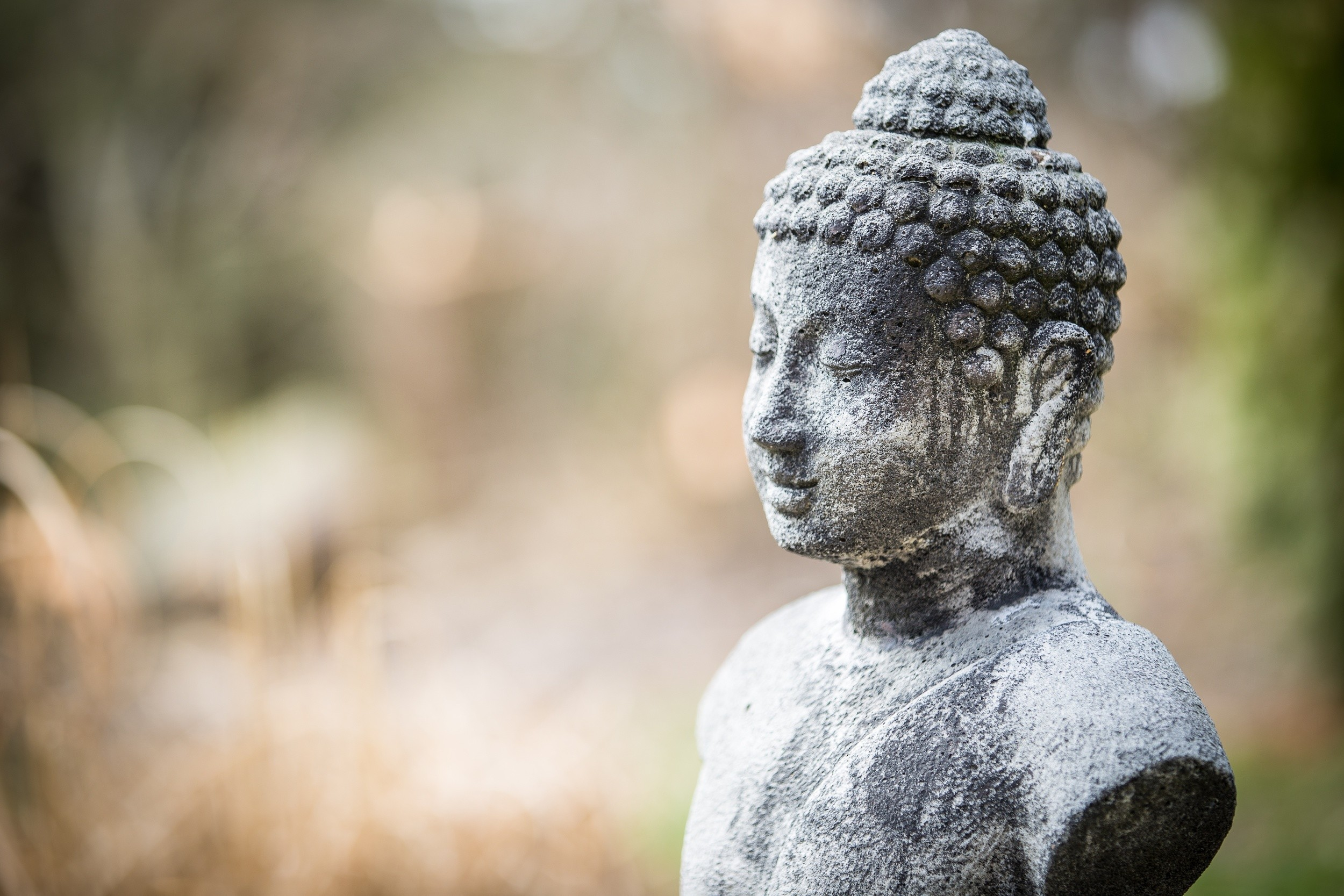 The Secret Buddha Garden