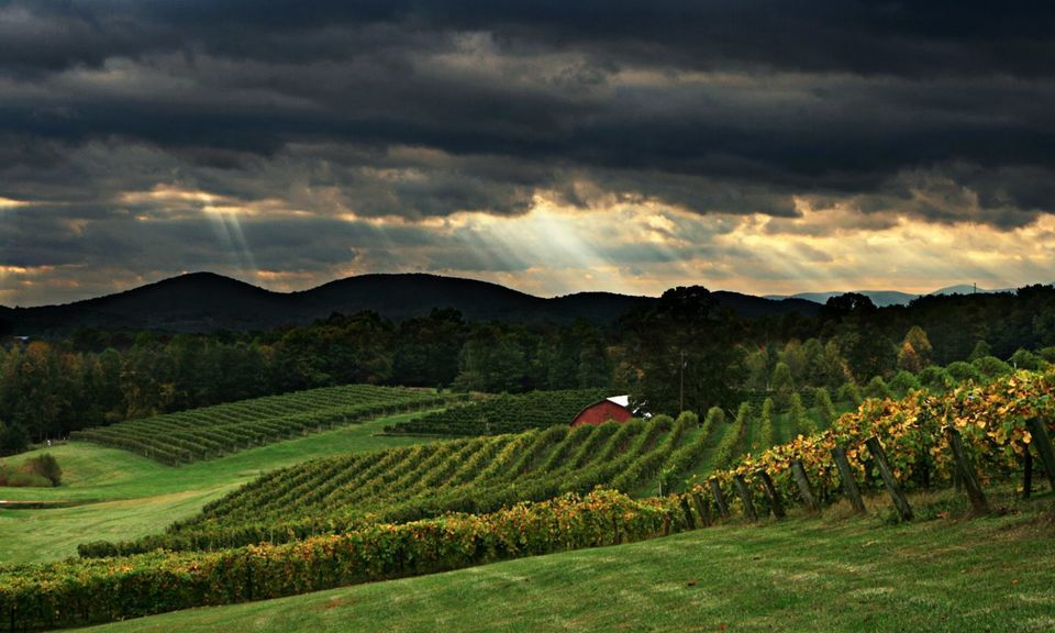 Tour the North Georgia Wine Country