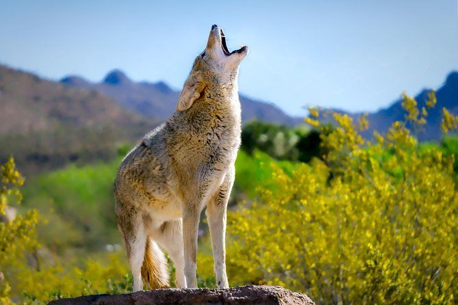 Arizona-Sonora Desert Museum, Tucson
