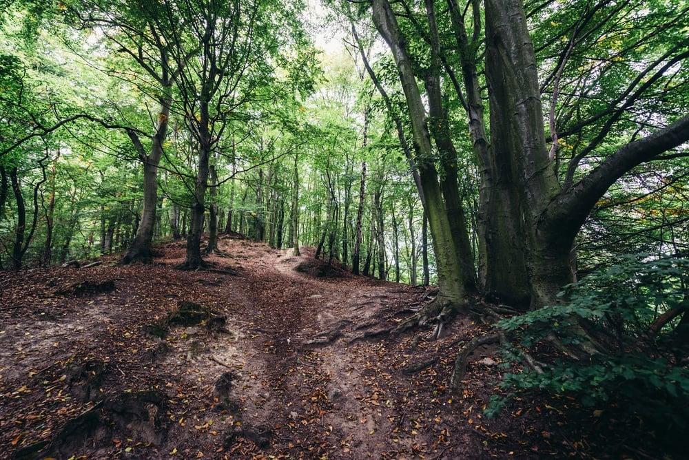 shutterstock-gdansk-forest