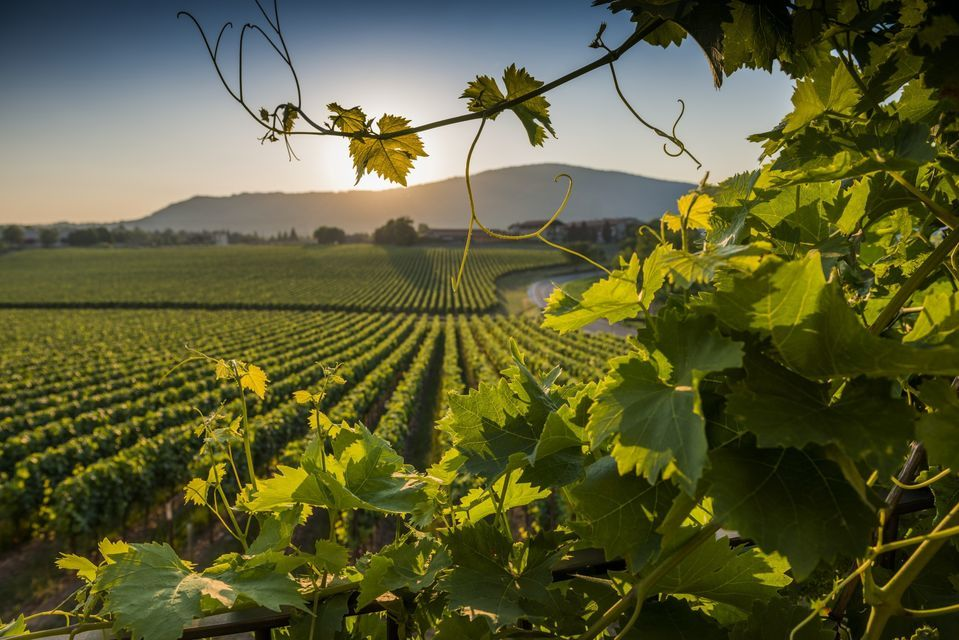 Franciacorta: Wine Country