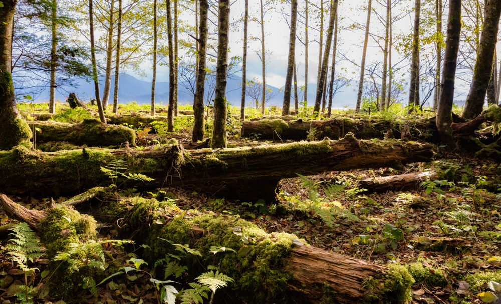 Explore the Tongass National Forest Juneau