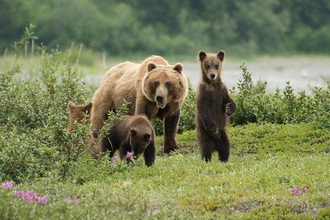 Go Bear Viewing at Pack Creek Juneau