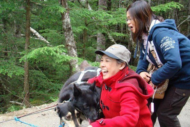 Have Fun Together on a Dog Sled Ride Juneau