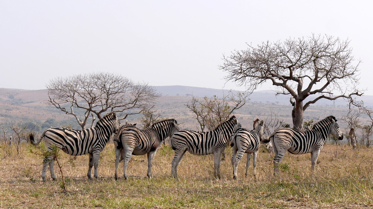 Is South Africa Safe to Visit