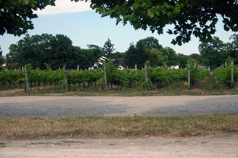 Pelee winery