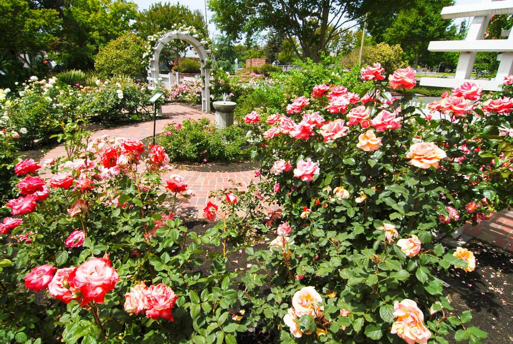 Luther Burbank Home and Gardens, Santa Rosa, California
