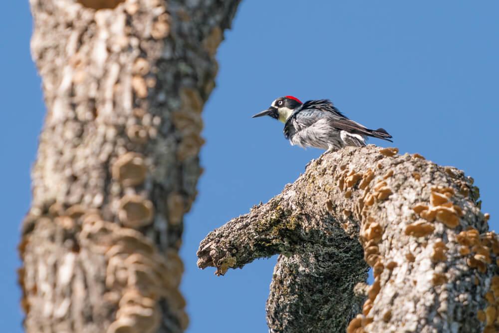 Trione-Annadel State Park, Santa Rosa, California
