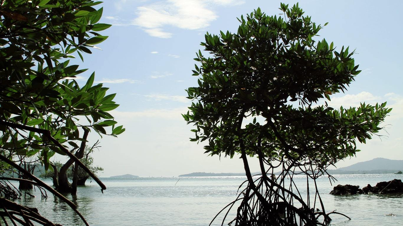 Mangroves on Phuket Island