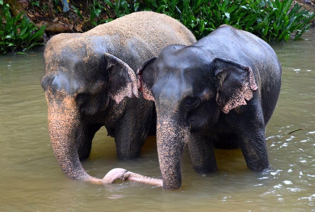 Millennium Elephant Foundation - best place to go in Sri Lanka to see elephants