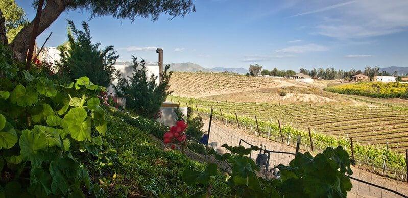 Californian wines