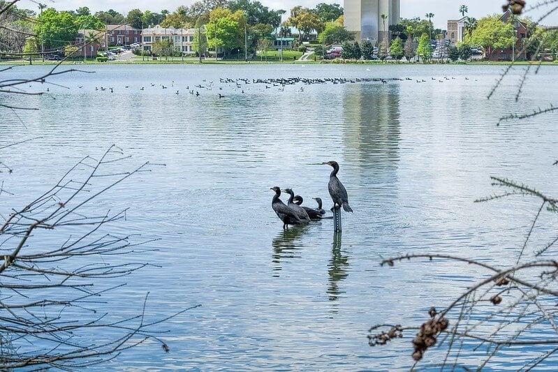 Lake Morton