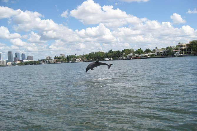 See Dolphins on the Late Afternoon Cruise