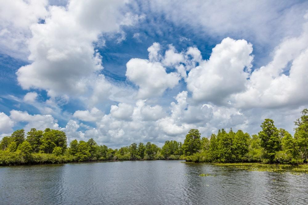 Lettuce Lake Regional Park