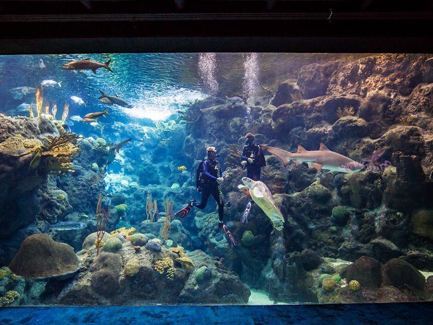 Tampa's Marine Aquarium