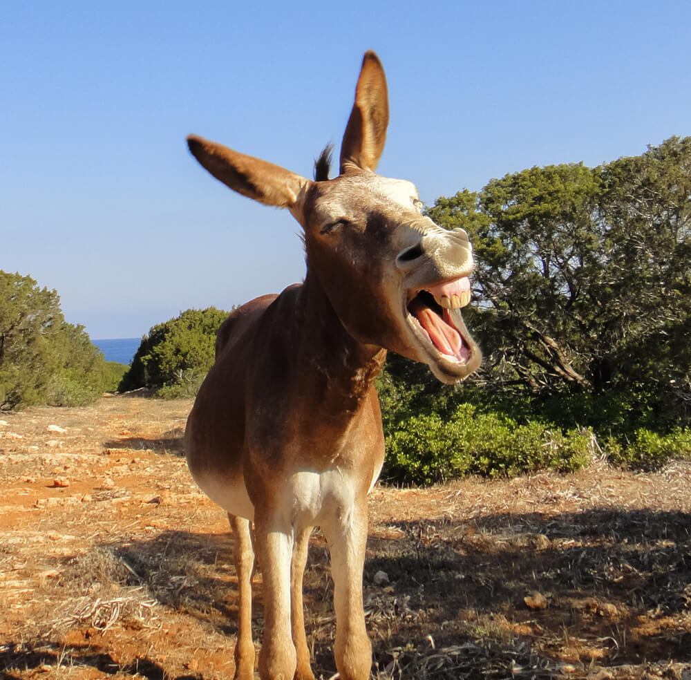 Donkey getting excited about anal sex in hostels