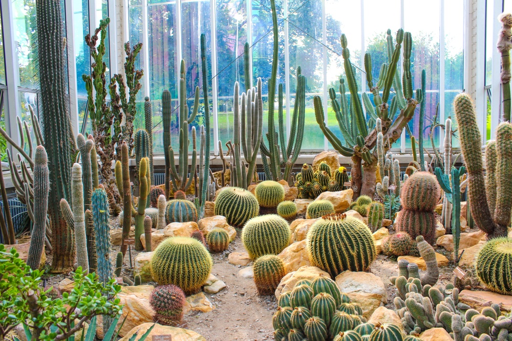 Hit up the Conservatory and Botanical Garden of the City of Geneva