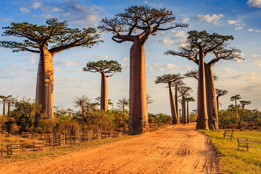 20 Top Safety Tips for Traveling to Madagascar